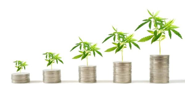 Why this ASX cannabis share stormed higher today